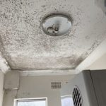 mould removal in Canberra